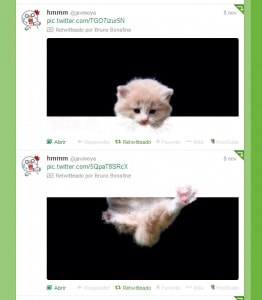twitter-gato